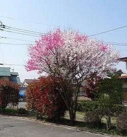 春ですね~~~!!